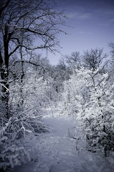 Free Winter Forest In Snow Royalty Free Stock Image - 17471656