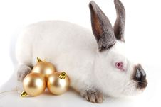 Free Rabbit On A White Background Stock Photography - 17472792