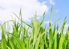 Green Grass Field Under Midday Sun In Blue Sky. Stock Photo