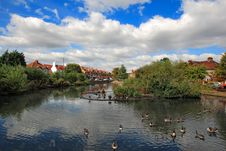 Day View Of Ducks Swimming In The Pond Royalty Free Stock Photo