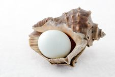 Conch Shell  And Eggs Stock Image