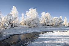 Free Snow Tree Stock Photos - 17477213