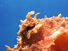 Free Octopus Eye Royalty Free Stock Photo - 17479055