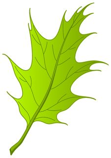 Free Leaf Of Oak Iberian, Royalty Free Stock Photography - 17479407