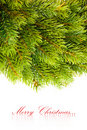 Free Branch Of Christmas Tree Royalty Free Stock Image - 17480686