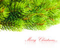 Free Branch Of Christmas Tree Royalty Free Stock Image - 17480766