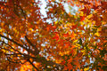Free Colorful Autumn Maple Leaf Stock Photo - 17481180