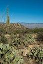 Free Desert Landscape Royalty Free Stock Image - 17488766
