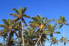 Free Tropic Palms Royalty Free Stock Photos - 17480478