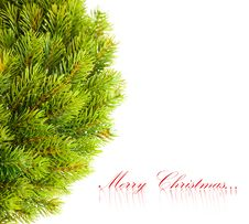 Free Branch Of Christmas Tree Stock Photography - 17480792