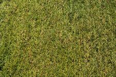 Free Green Natural Texture Stock Image - 17483211