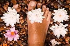Free Foot On A Stone Beach With Flowers Stock Images - 17484124