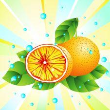 Free Fresh Orange Stock Image - 17484481