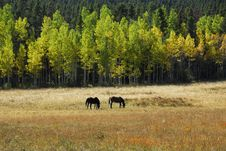 Free Grazing Horses Stock Image - 17484621