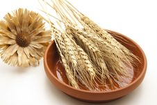 Free Wheat Ears With Blossom Royalty Free Stock Photography - 17487077