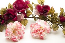 Carnations With Rose Royalty Free Stock Photos