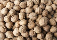 Free Walnut Royalty Free Stock Image - 17488156
