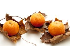 Free Tangerines And Leaves Stock Images - 17488854