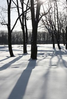 White Winter Morning In The Park Stock Photo