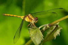 Free Dragonfly Stock Photo - 17490050