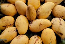 Free Golden Mangoes Royalty Free Stock Image - 17490536