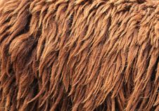 Brown Sheepskin Background Royalty Free Stock Images