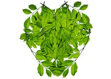 Free Green Leaf Love Heart Frame Isolated Stock Photos - 17491503