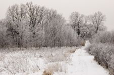 Free Forest In Winter Royalty Free Stock Image - 17492646