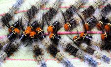 Caterpillars Marching Royalty Free Stock Photos