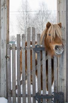 Free Pony Royalty Free Stock Photography - 17493527