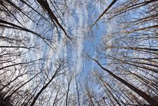 Free Crown Of Trees With Blue Sky Stock Images - 17493634