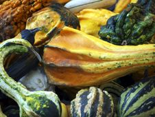 Free Ornamental Gourds-curved Royalty Free Stock Photos - 17494288