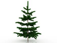 Free Big Christmas Tree №6 Royalty Free Stock Images - 17494389