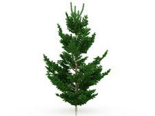 Free Big Christmas Tree №7 Royalty Free Stock Photography - 17494407