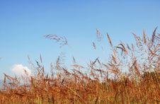 Free Grass Field Stock Photos - 17494533