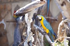 Free Blue And Yellow Macaw Stock Photos - 17495923