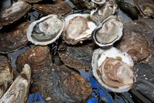 Free Fresh Oysters. Royalty Free Stock Images - 17497599