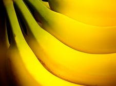 Free A Hand Of Bananas Royalty Free Stock Photo - 17497875