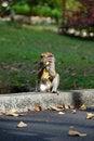 Free Monkey Royalty Free Stock Photos - 1759488