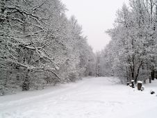 Free Winter Forest Road Royalty Free Stock Images - 1751709