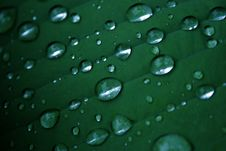 Free Water Drops 2 Royalty Free Stock Images - 1752569