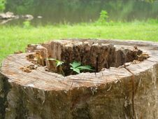Free Tree Stump Stock Images - 1753694
