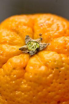 Free Top Of A Fresh Orange Stock Photo - 1754690