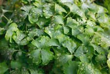 Frost On A Leaves Royalty Free Stock Image