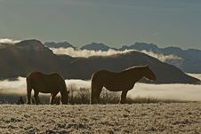 Free Horses In Snow Royalty Free Stock Photo - 1755815