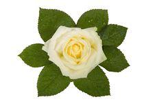 Valentines, Flower Stock Photography