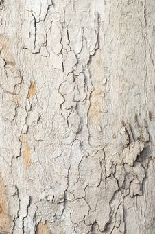 Free Platan Bark Texture Stock Photo - 1756400