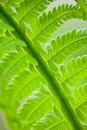 Free Fern Leaves Royalty Free Stock Photo - 17501105