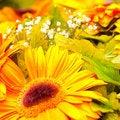 Free Flower Stock Photos - 17503783