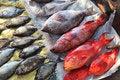 Free Fish Market Stock Image - 17508641